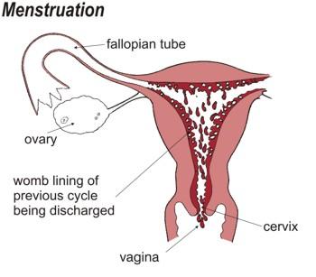 women giving birth tube
