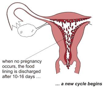 Testosterone Supplements Women Gnc